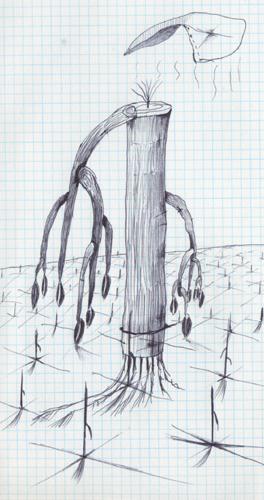 下に向いている木