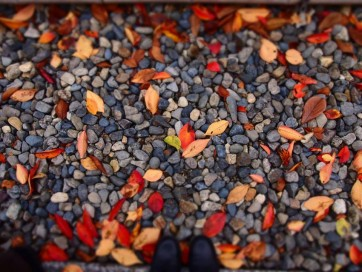 砂利と落ち葉