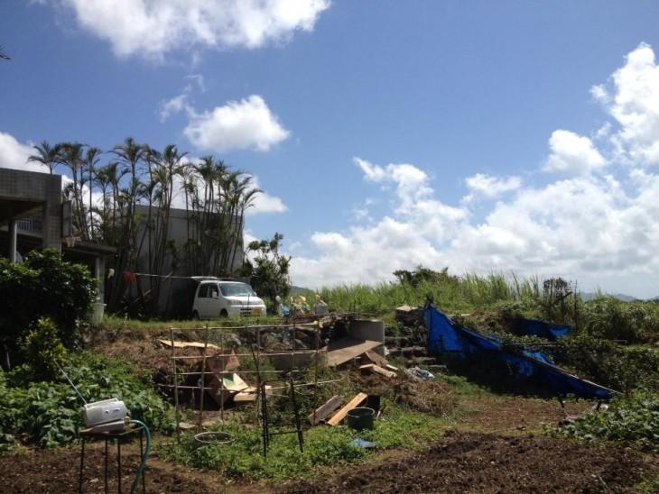 畑では父ちゃんがニンニクやらっきょ、島バナナなどを育てている。