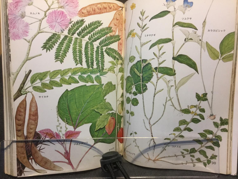 薬になる植物 p30-31