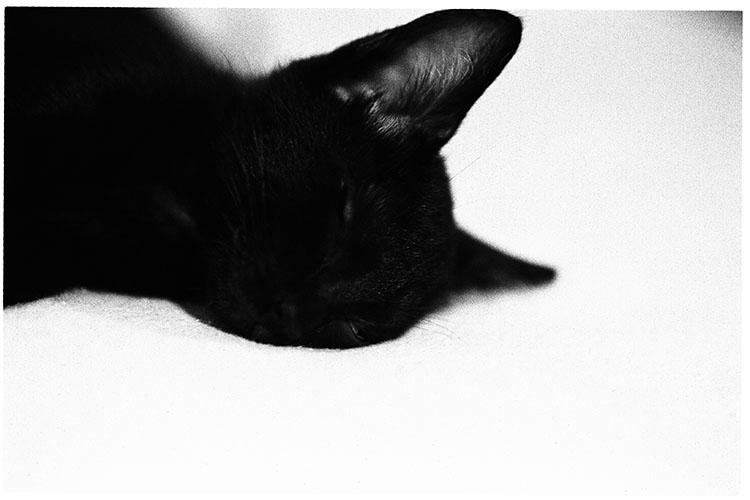 0508夏子猫06