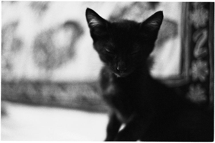 0508夏子猫01