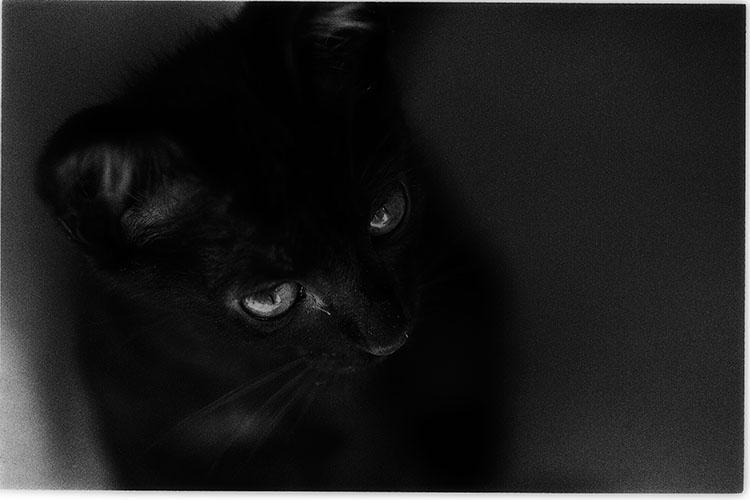 0508夏子猫19