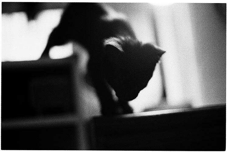 0508夏子猫03
