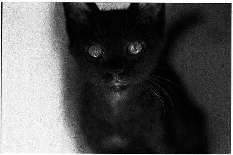 0508夏子猫17
