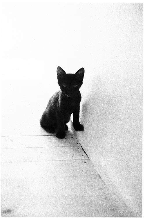 0508夏子猫16