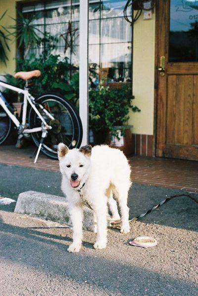 apartment-photo-dog01-t