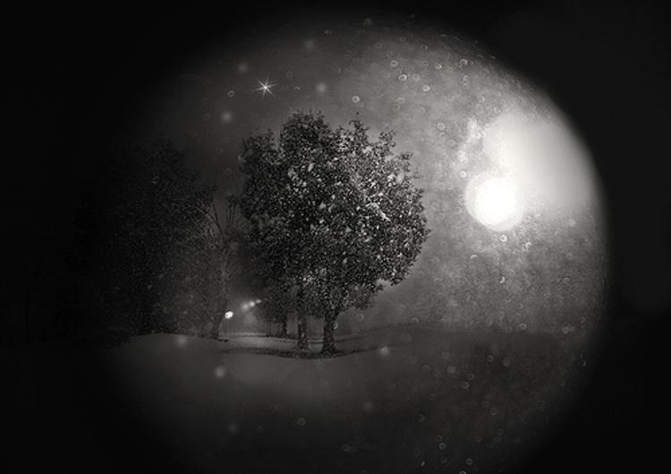 「夜の森の小さなおはなし」