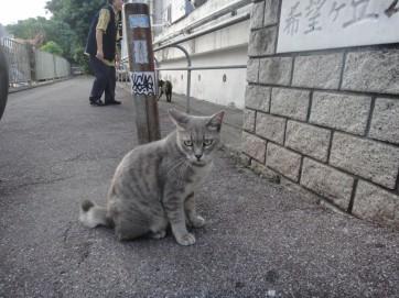 街猫でお別れ