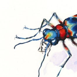 虫の譜|ハンミョウ Cicindela chinensis japonica