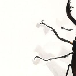 虫の譜|ノコギリクワガタ Prosopocoilus inclinatus