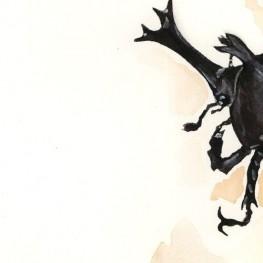 虫の譜|カブトムシ Trypoxylus dichotomus septentrionalis
