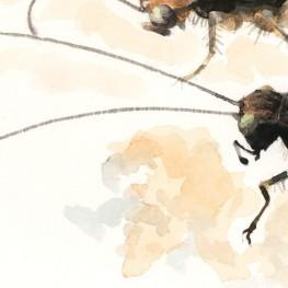 虫の譜|マダラスズ Dianemobius nigrofasciatus