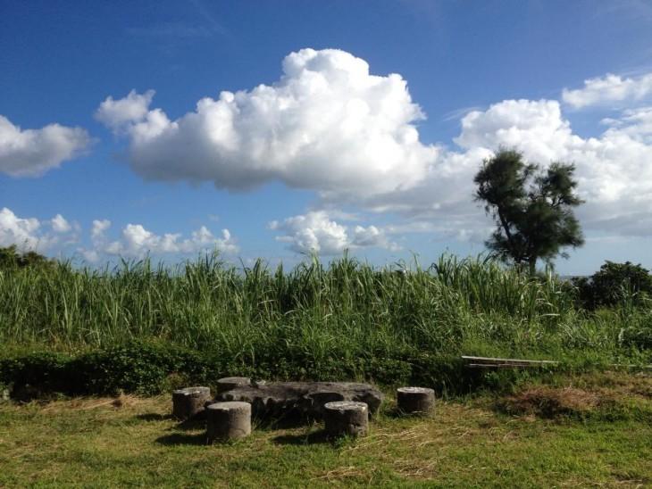 庭の前にはサトウキビ畑が。