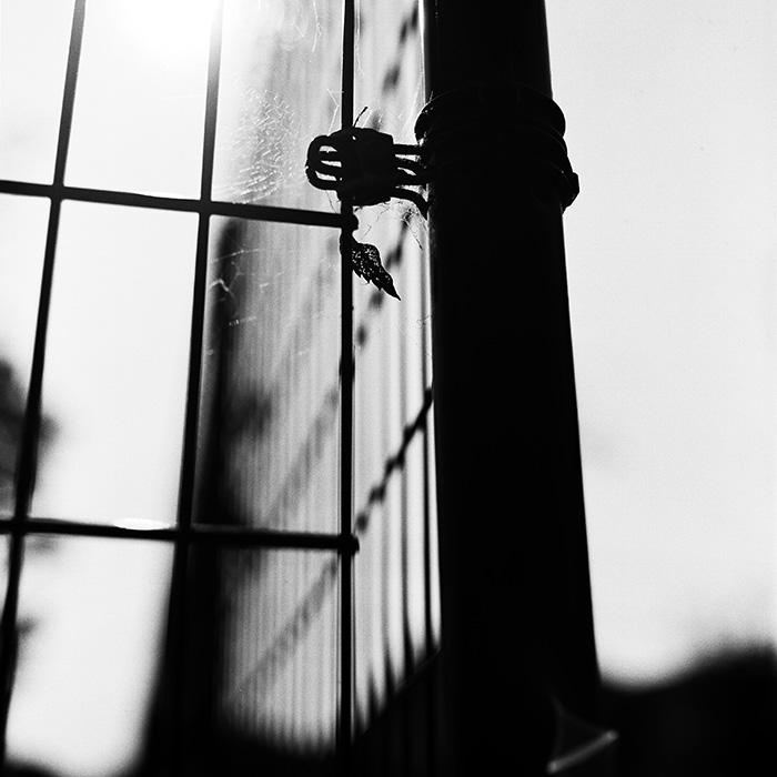 蜘蛛の巣0511