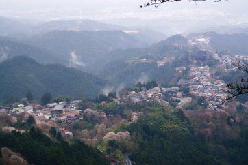 【吉野山。この山で義経と静は生き別れとなりました。吉野の山に静ひとり…失意と孤独に苛まれたことでしょう】