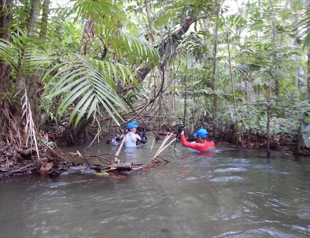 ▲ジャングルに道はない。コースという名の川があった。