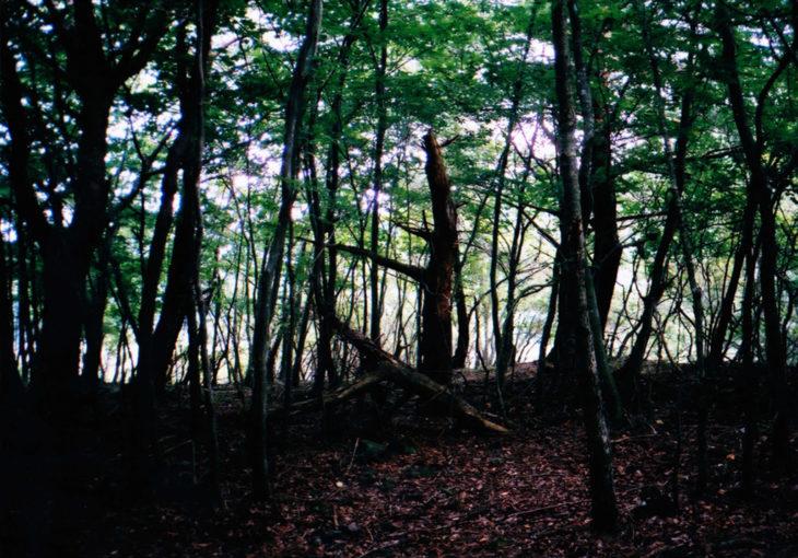木々を巡る旅