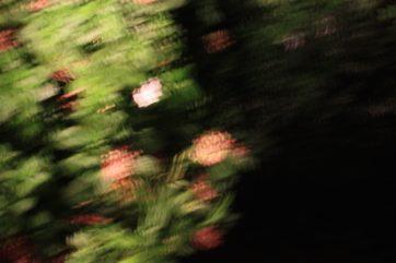 おとなの五教科_1 理科【花の分類】