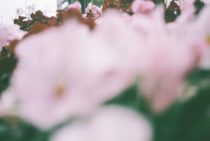 幸いの花束