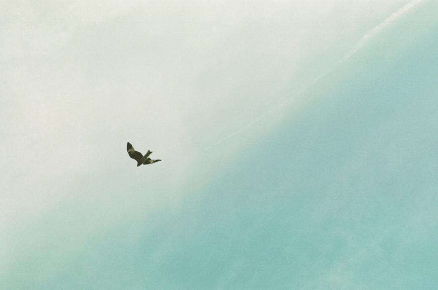 駅を降りてトンビが空を泳いでいたら、その街で暮らしてみたらいい:ある土曜日のこと01